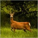 Boldrewood Deer Sanctuary